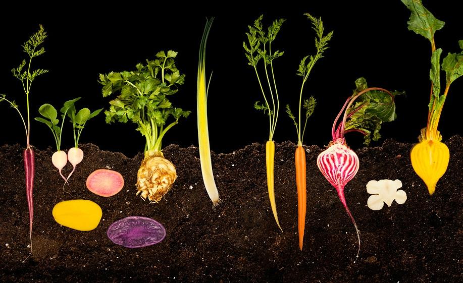 Name Vegetable Root: Ryan Matthew Smith