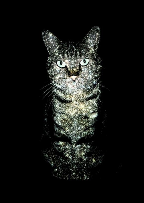 Photo by Zippora Lux: Celestial Cat