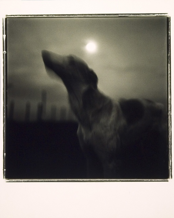 Photo by Keith Carter: Luna