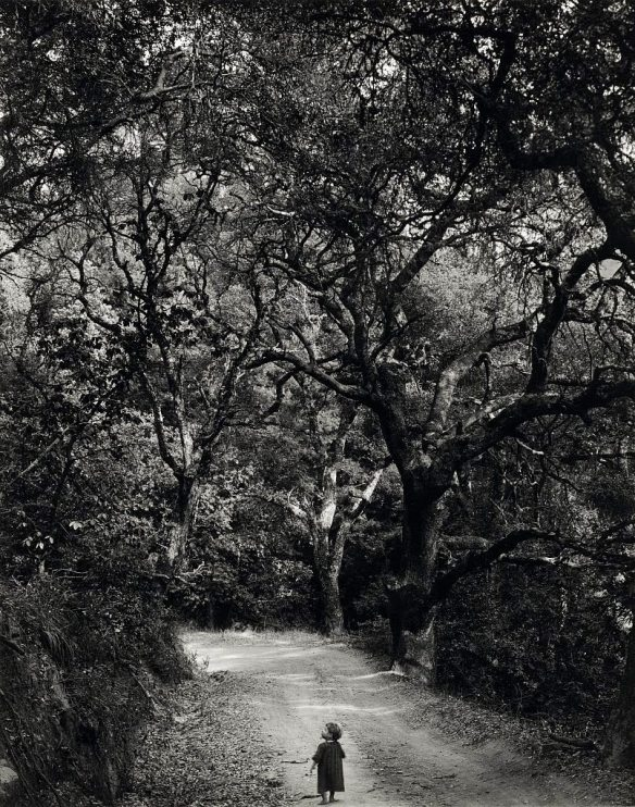 Photo by Wynn Bullock: Child on Forest Road (1958)